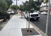 Downtown Beautification Tree Plantings Thumb