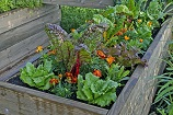 TOMORROW: Free Online Class! Water-Efficient Edible Gardening